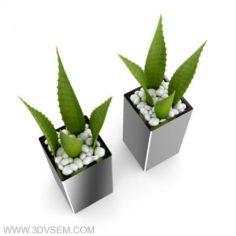 Aloe flower Houseplant 3D Model