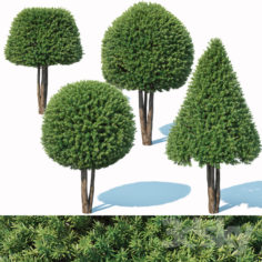 Taxus Baccata # 5 topiary set 2                                      3D Model