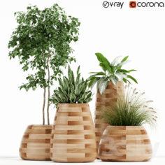Plants collection 129 indigenus tuber                                      3D Model