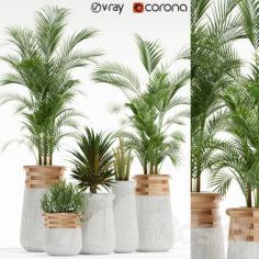 Plants collection 130 indigenus soma                                      3D Model