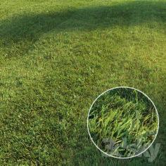 Mowed lawn                                      3D Model