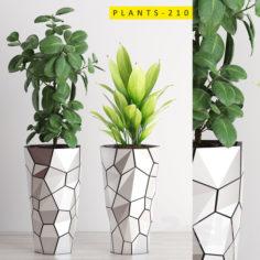 PLANTS 210                                      3D Model