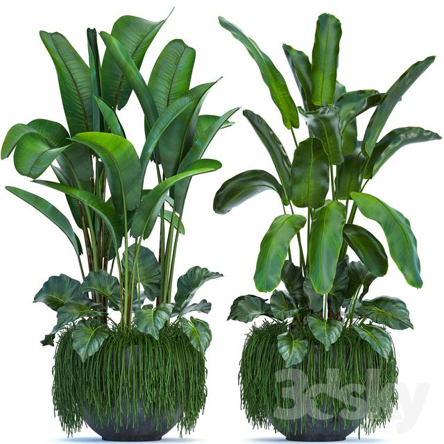 Plant collection 252.                                      3D Model