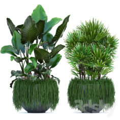 Plant collection 254.                                      3D Model