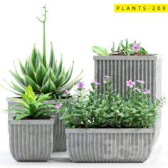 PLANTS 209                                      3D Model