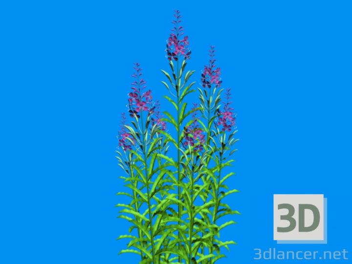 3D-Model  blooming Sally
