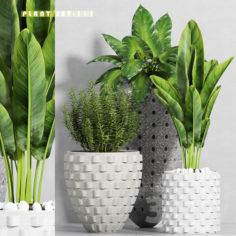 plant set-111                                      3D Model