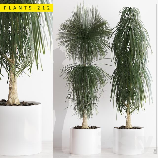 PLANTS 212                                      3D Model