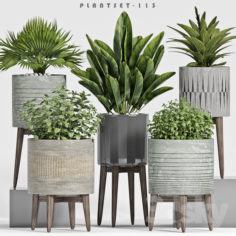 plant set-113                                      3D Model
