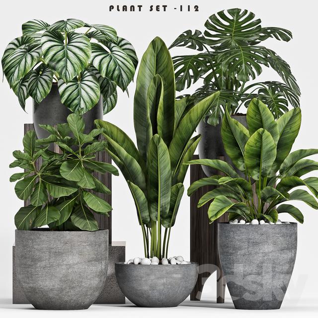 plant set-112                                      3D Model