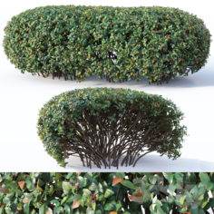 Cotoneaster lucidus # 9. Wide customizable hedge                                      3D Model