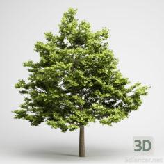 3D-Model  Tree