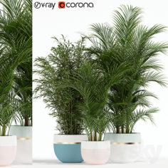 Plants collection 136                                      3D Model