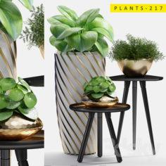 plants 217                                      3D Model