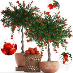 Plant Collection 264. Pomegranate                                      3D Model