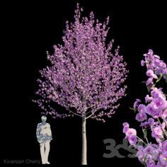 Kwanzan cherry                                      3D Model