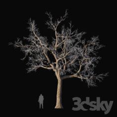 Oak frozen                                      3D Model