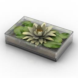 Lily 3D Model